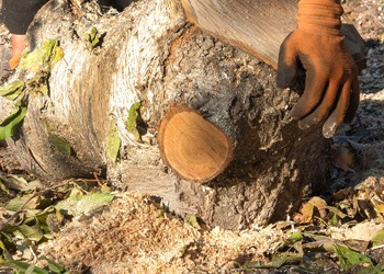 Aussie Tree Solutions DIY By Hand