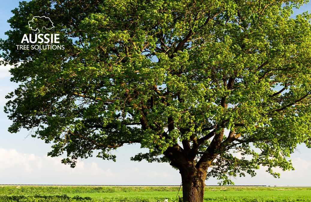 Ultimate Summer Tree Care Guide For Brisbane Locals