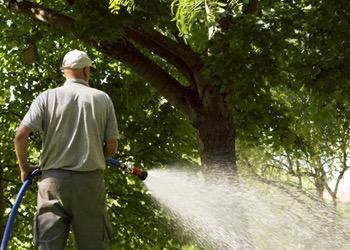 Aussie Tree Solutions Water