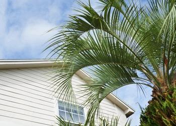 Aussie Tree Solutions Maintenance