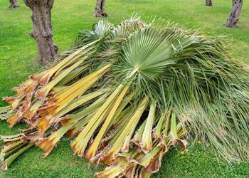 Aussie Tree Solutions Regular Check Ups
