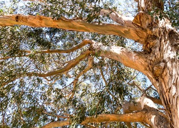 Aussie Tree Solutions Before You Remove A Tree