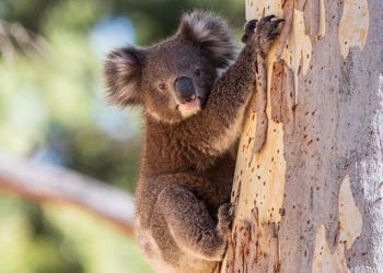 Aussie Tree Solutions Permit
