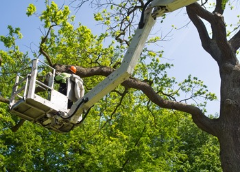 Aussie Tree Solutions Have Your Tree Inspections
