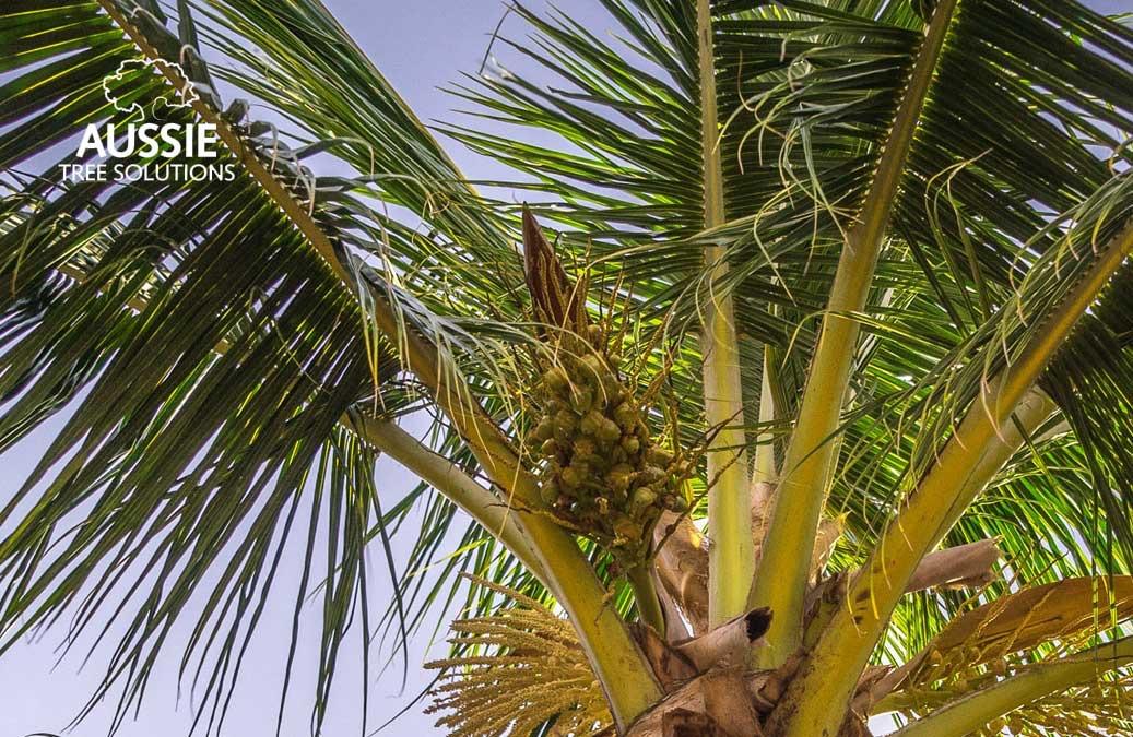 Aussie Tree Solutions How To Hire The Best Brisbane Arborist
