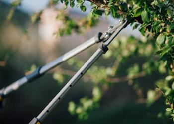 Aussie Tree Solutions Pruning