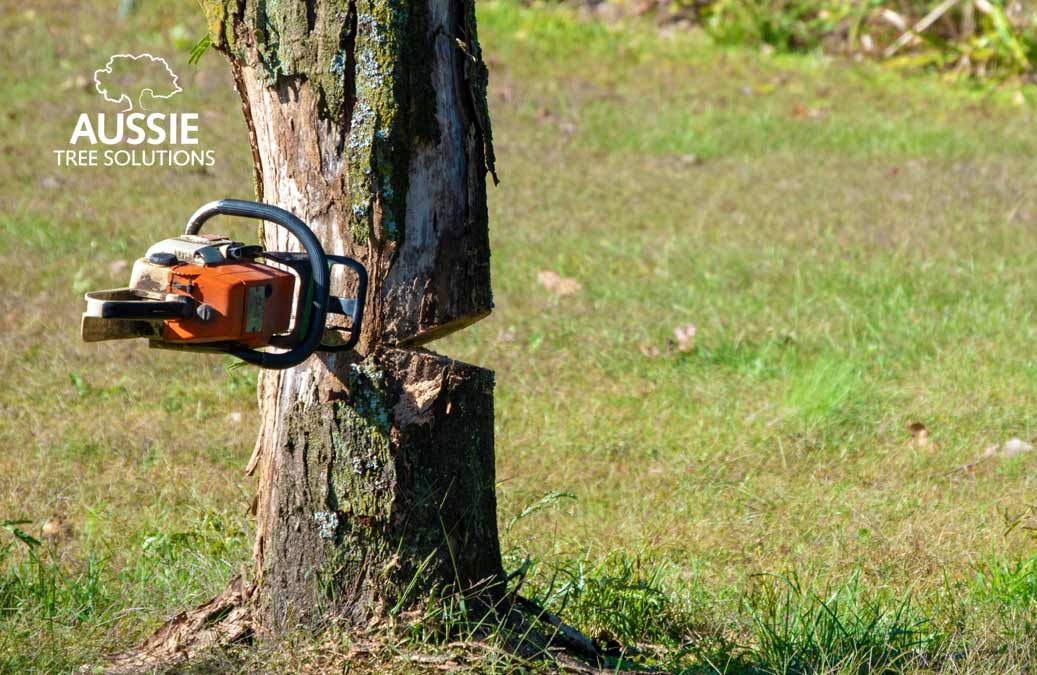 Aussie Tree Solutions The Dangers Of DIY Tree Removal