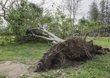 Aussie Tree Solutions Tree Has Fallen