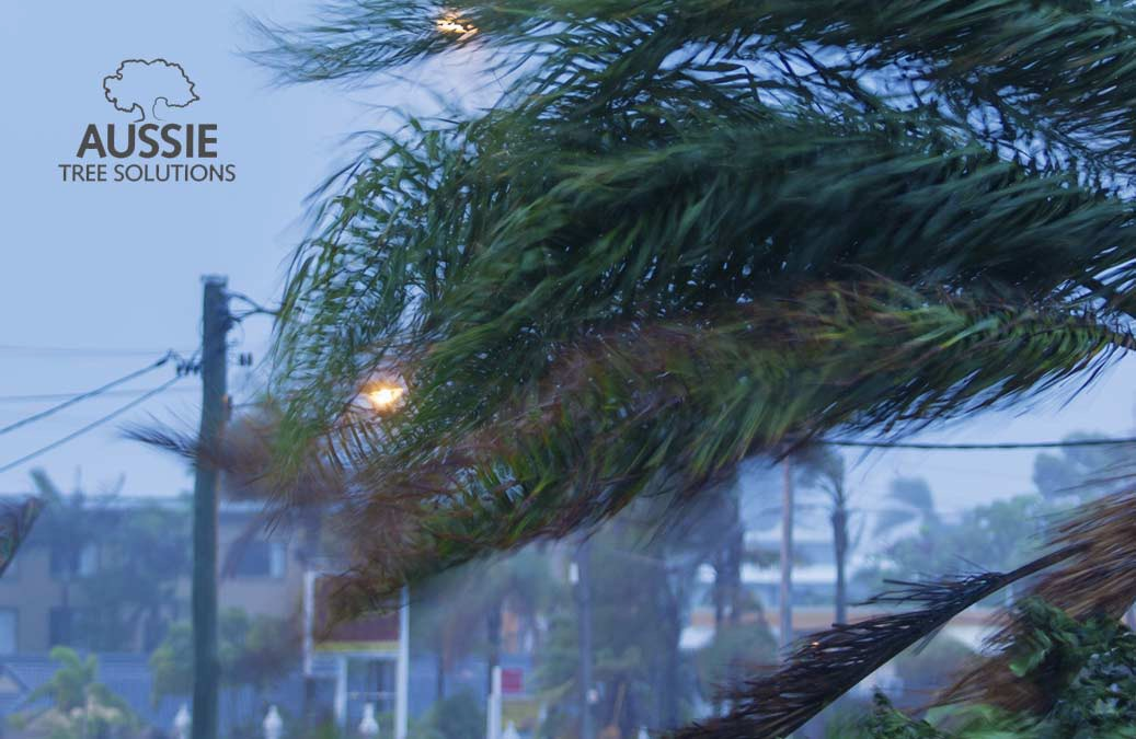 Aussie Tree Solutions When To Call An Emergency Tree Service Provider