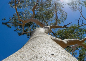 Aussie Tree Solutions Keep Your Tree Healthy