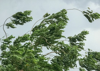 Aussie Tree Solutions Makes Your Tree Safer