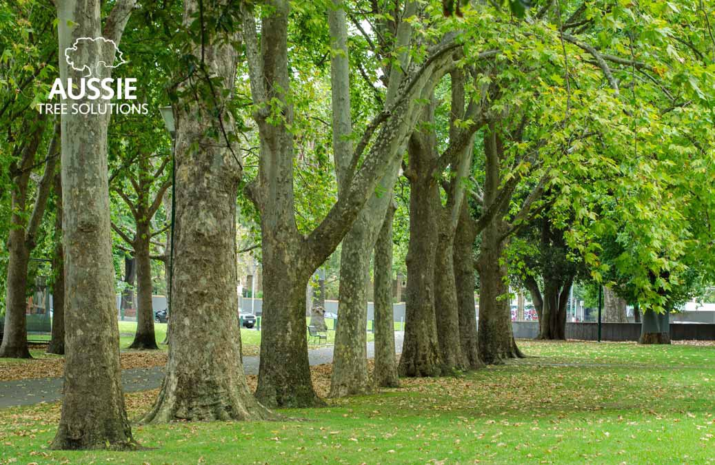 The Benefits Of Pruning Your Trees