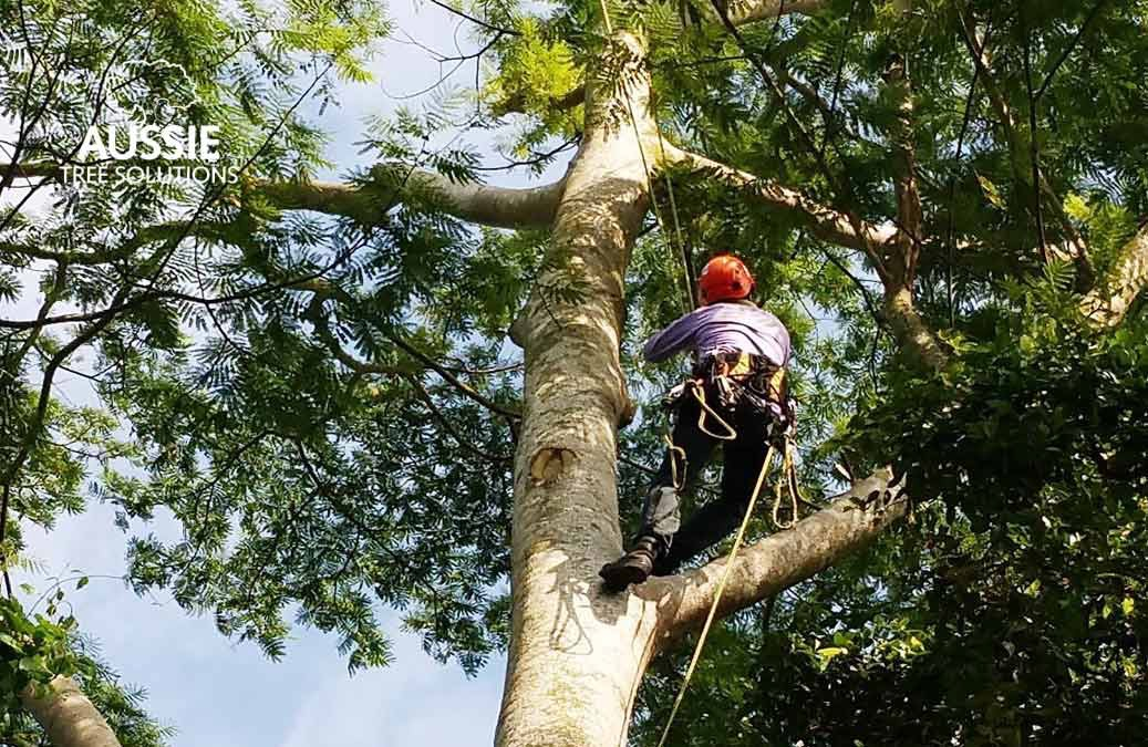 The Benefits Of Commercial Tree Services