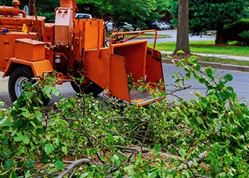 Aussie Tree Solutions Commercial Tree Service Experts
