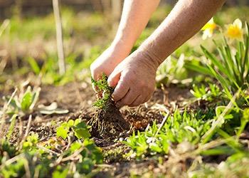 Aussie Tree Solutions Benefits