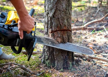 Aussie Tree Solutions Do You Have The Right Tools