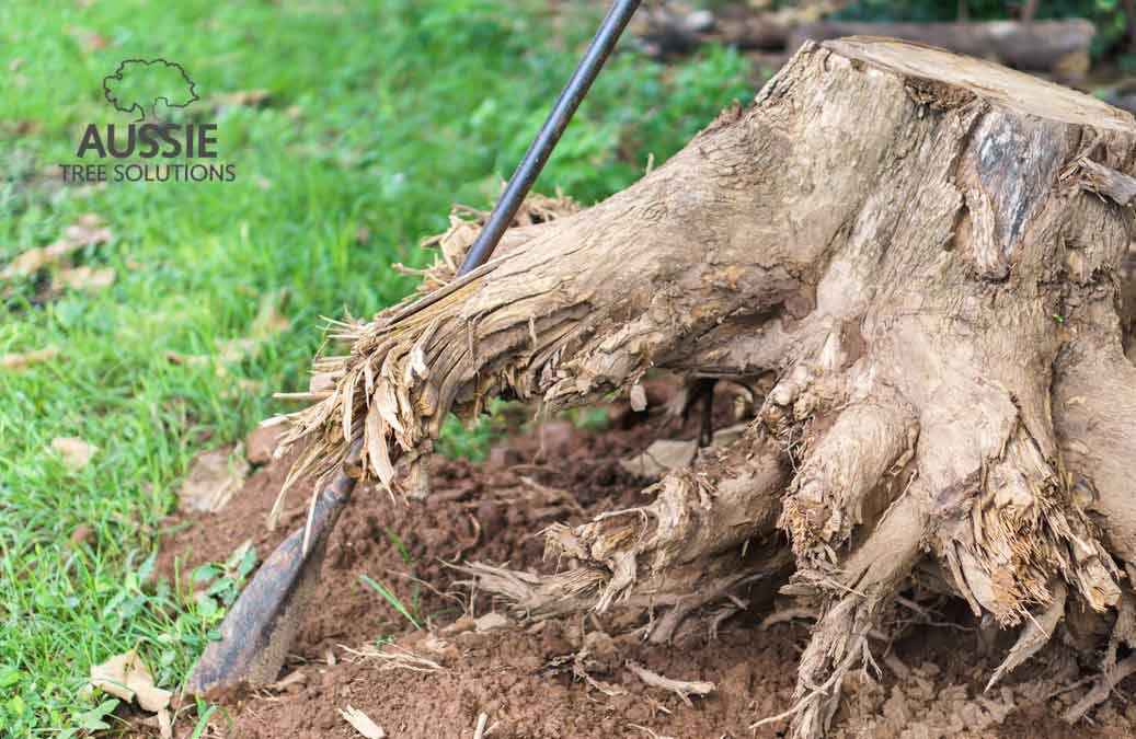 Do's And Don'ts For Easy Tree Removal