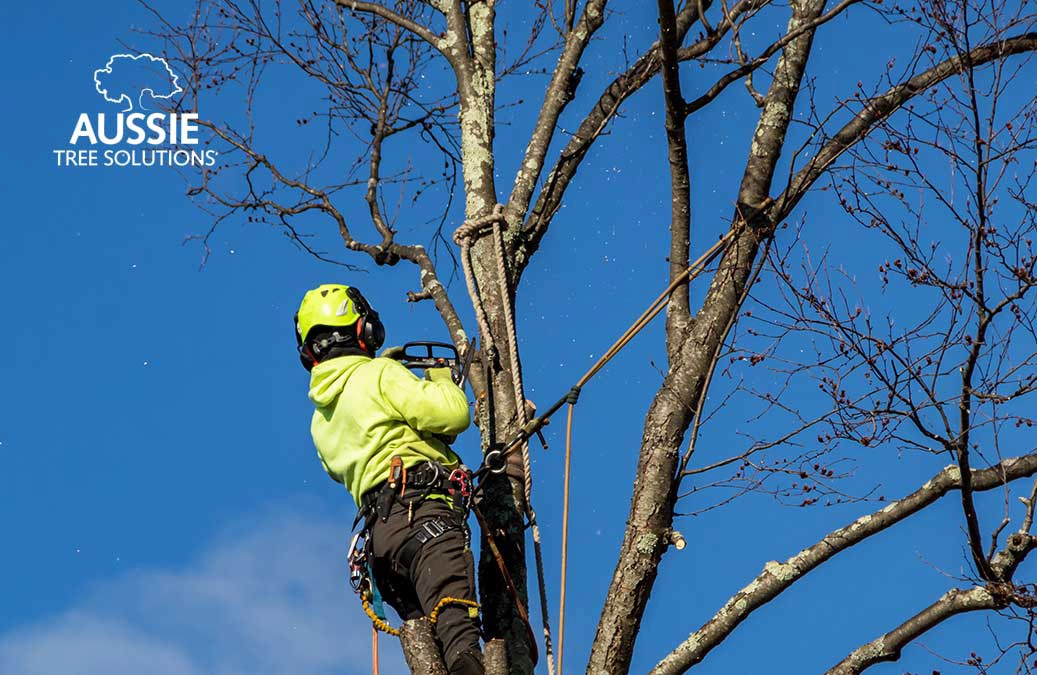 Top Tips For Large Tree Removal